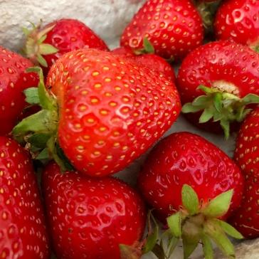 Erdbeer_Eis2
