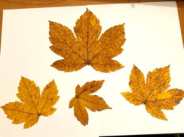 Herbstlöwe2